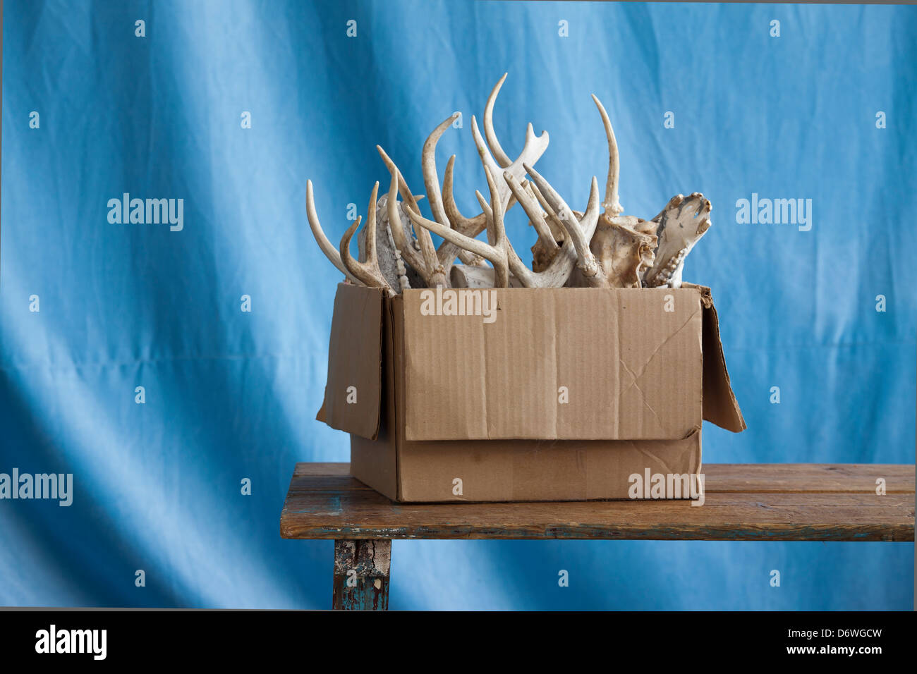 box of bones on table - Stock Image