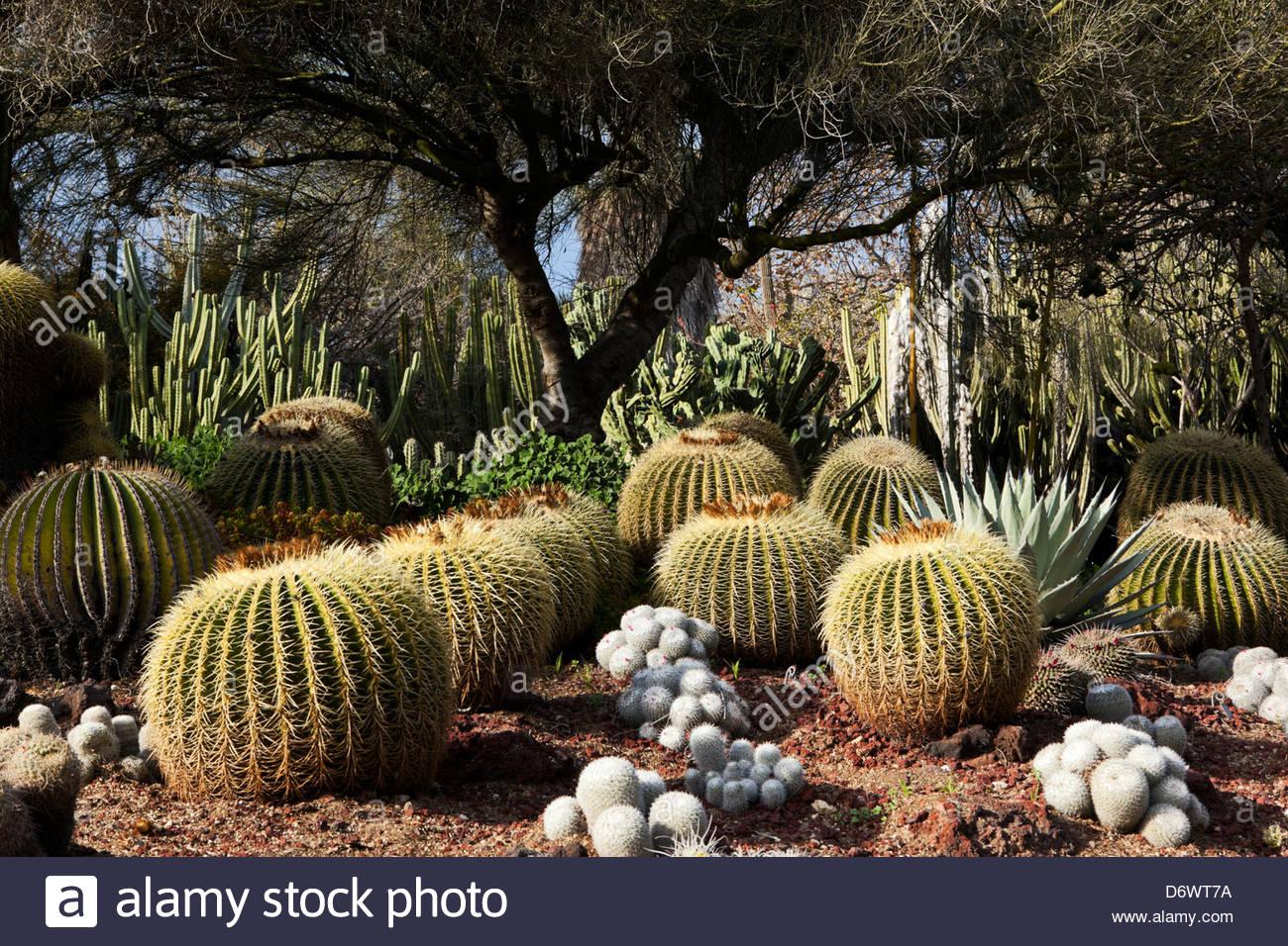 Desert Botanical Gardens Stock Photos & Desert Botanical Gardens ...