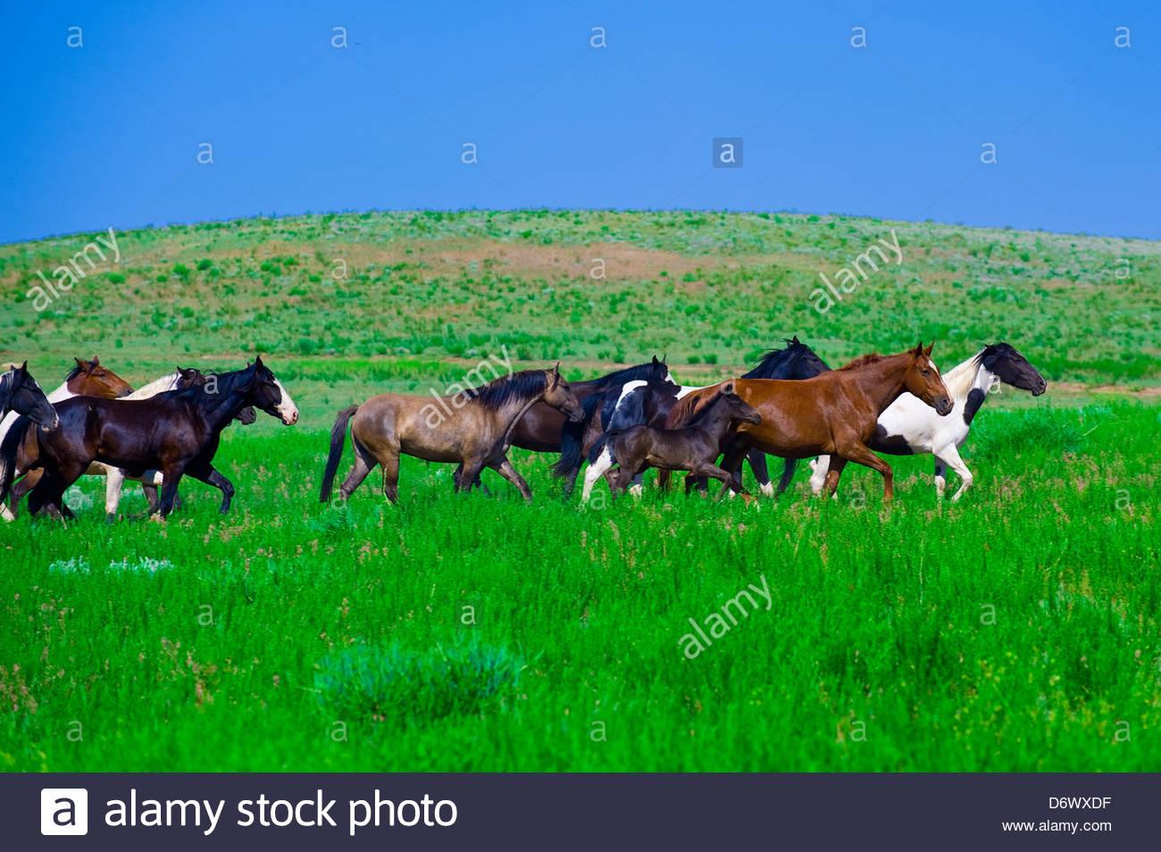 Mustang Horse Running Stock Photos Amp Mustang Horse Running