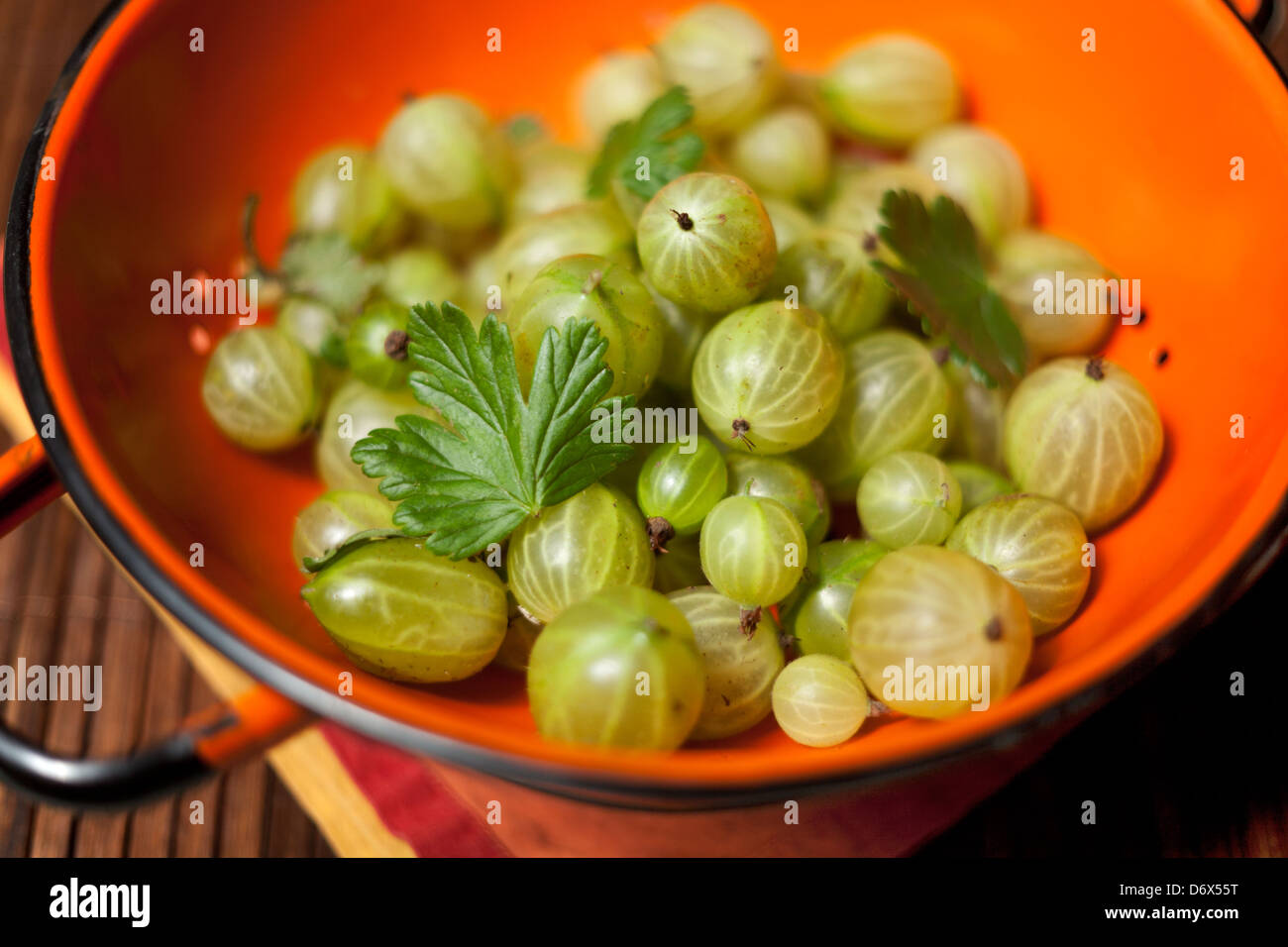 Handpicked gooseberries in an orange colander on a table - Stock Image