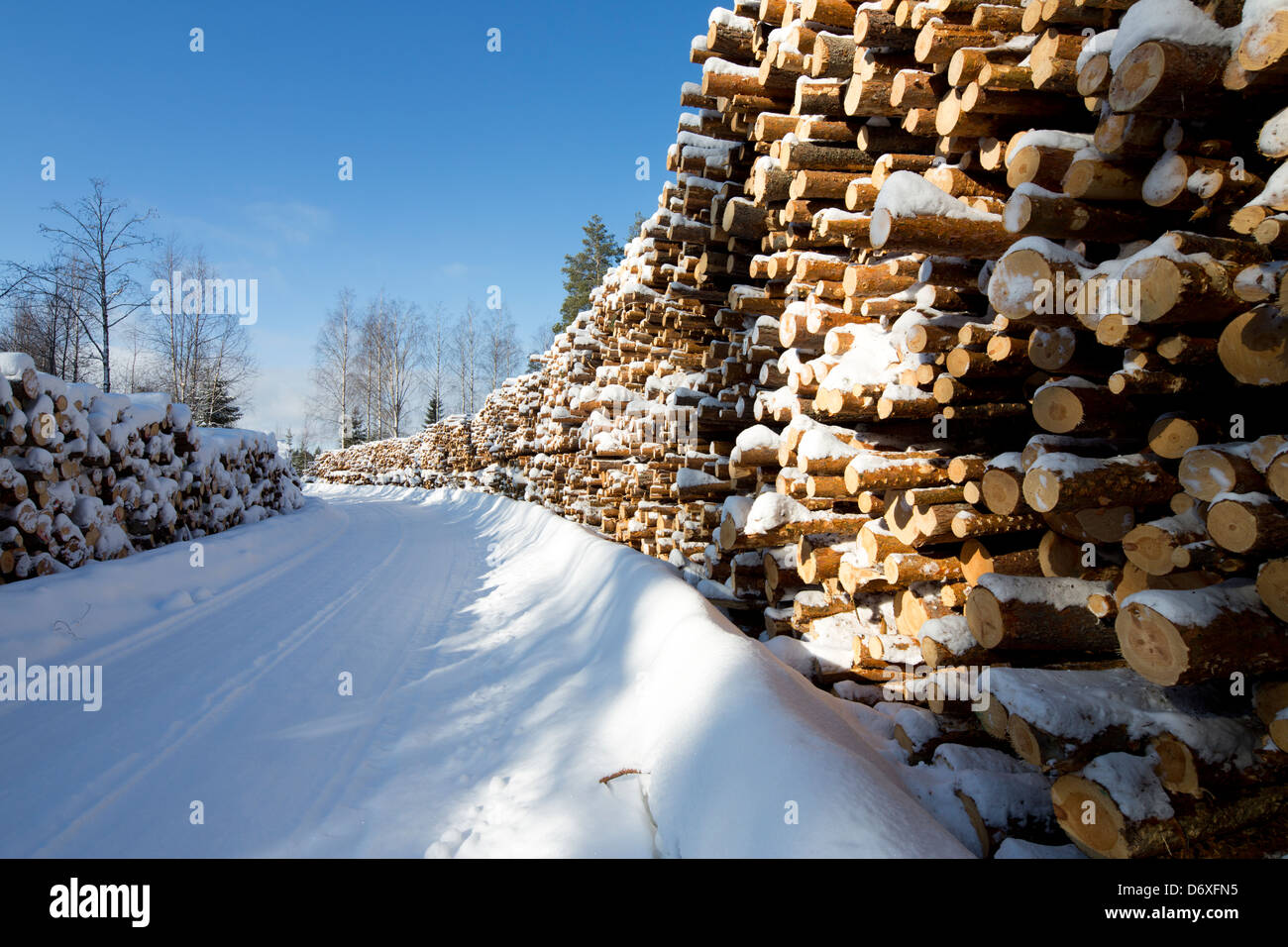 Piles of  pine ( pinus sylvestris ) logs at logging road , Finland - Stock Image