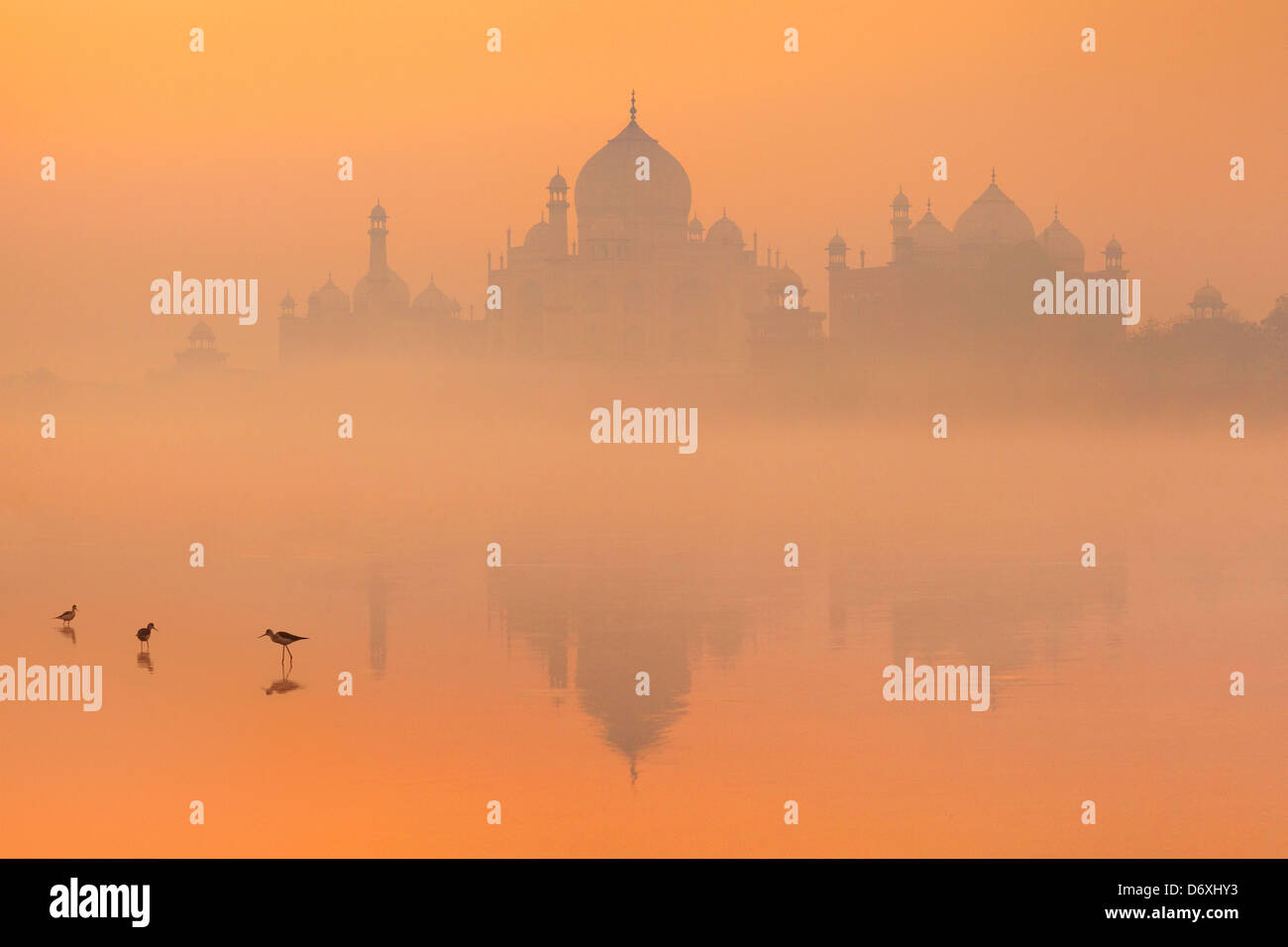 Skyline of Taj Mahal,  Agra, Uttar Pradesh, India Stock Photo