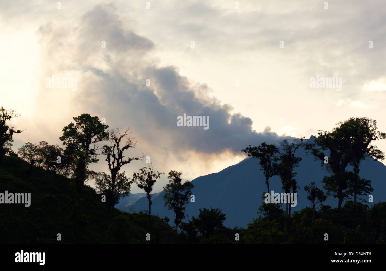 Reventador Volcano erupting with cloudforest trees in foreground. In the Ecuadorian Andes - Stock Image