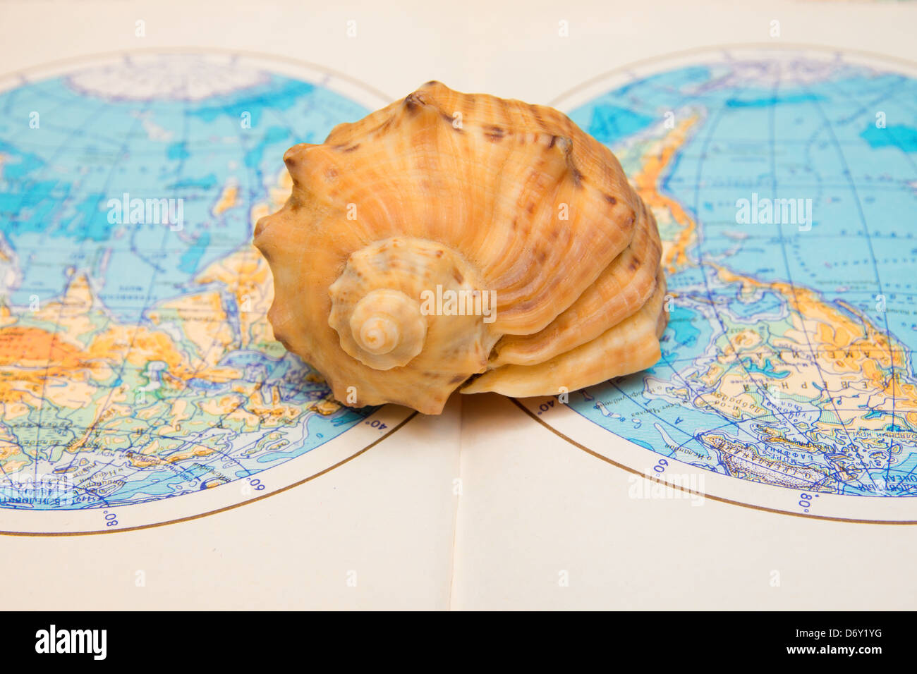 Sea shell over world map close up. Travel concept. - Stock Image