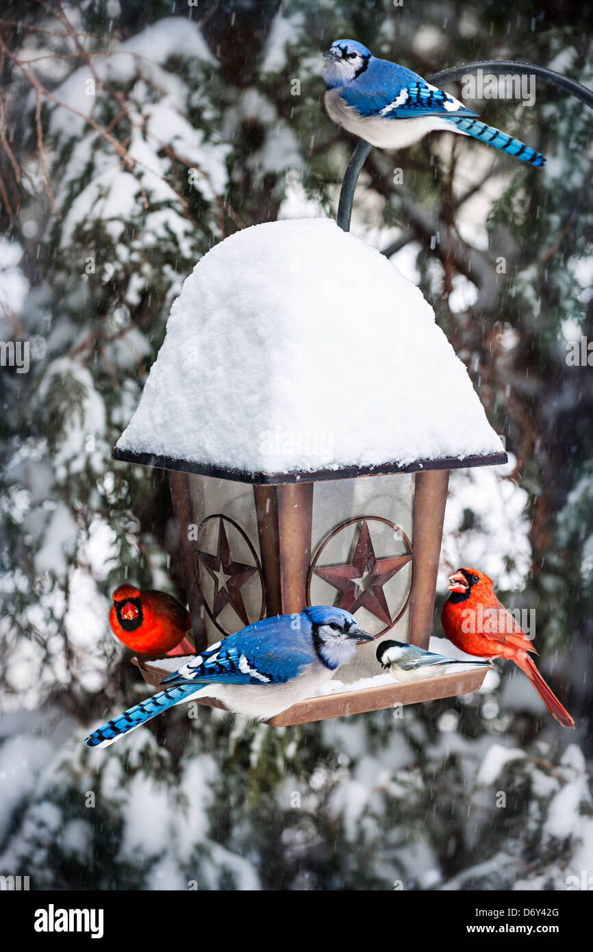 Bird Feeder In Winter With Blue Jays And Cardinals Stock Photo