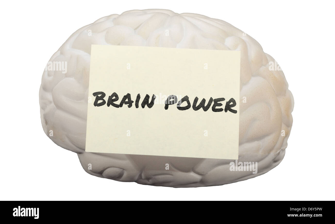 Post-it note with the words Brain Power on a model of human brain. - Stock Image