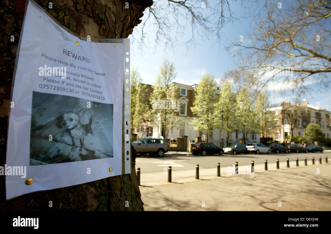 Reward notice for lost dog on tree in North London - Stock Image