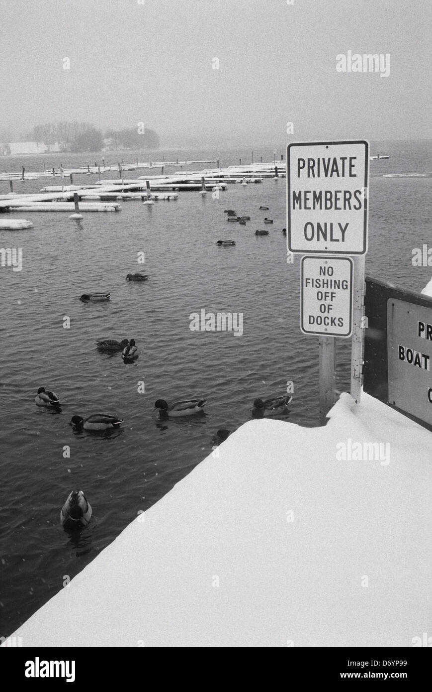 Ducks swimming in water next Private Members Only sign on snow covered dock Lake Michigan Chicago Cook County Illinois - Stock Image