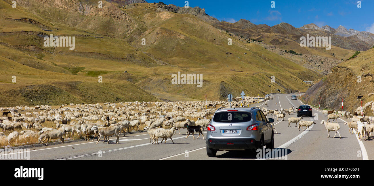Mountain sheep and goats roam in front of Nissan Qashgai 4x4 car in Val de Tena, the Spanish Pyrenees, Northern - Stock Image