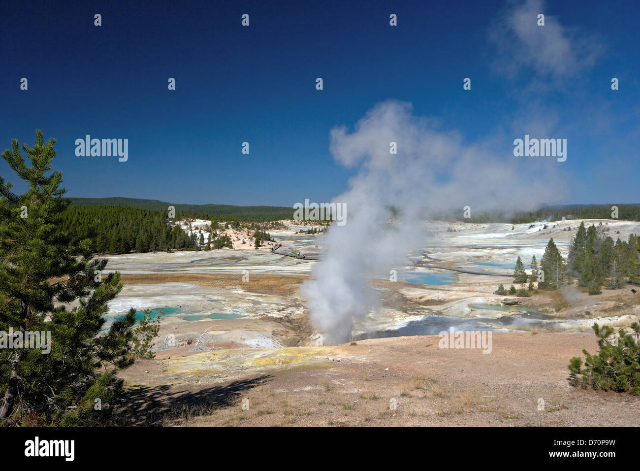 USA, Wyoming, Yellowstone National Park, Norris Geyser Basin, Black Growler Steam Vent in Porcelain Basin Stock Photo