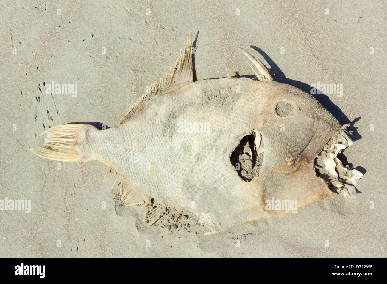 Rotten fish stock photos rotten fish stock images alamy dead fish on a beach on the pacific coast of ecuador stock image publicscrutiny Images