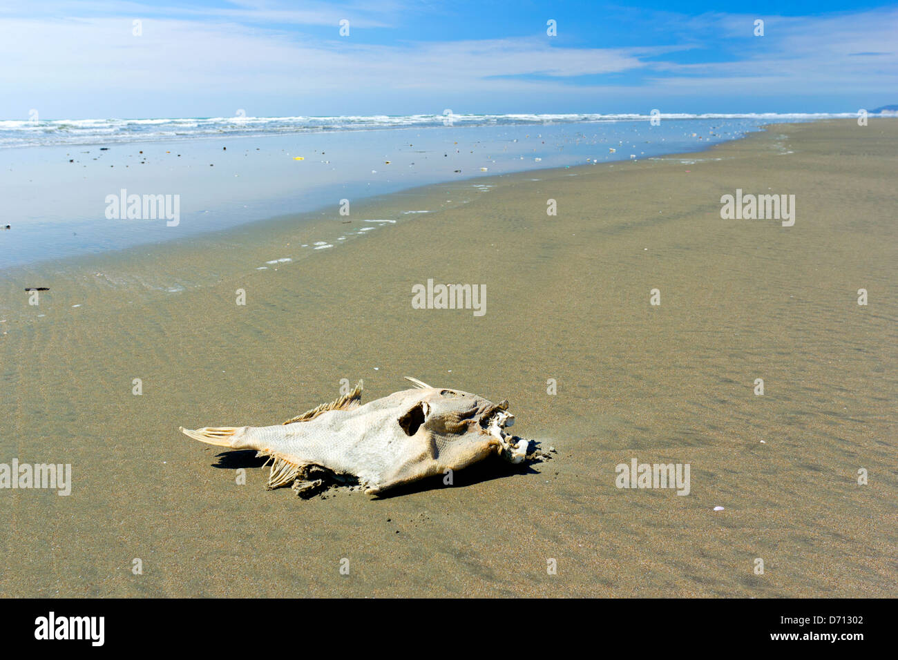 Dead fish on a beach on the pacific coast of ecuador stock photo dead fish on a beach on the pacific coast of ecuador publicscrutiny Images