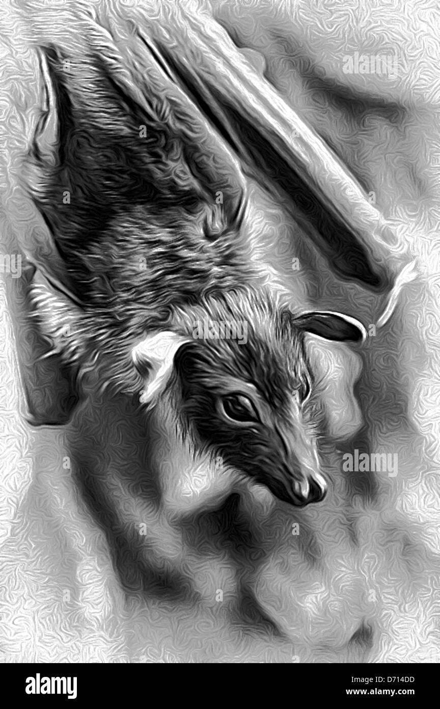 bat, flying dog,illustrations; animals; image; images,graphics; 1;  horizontal; illustrations bat,CG,bat, flying Stock Photo