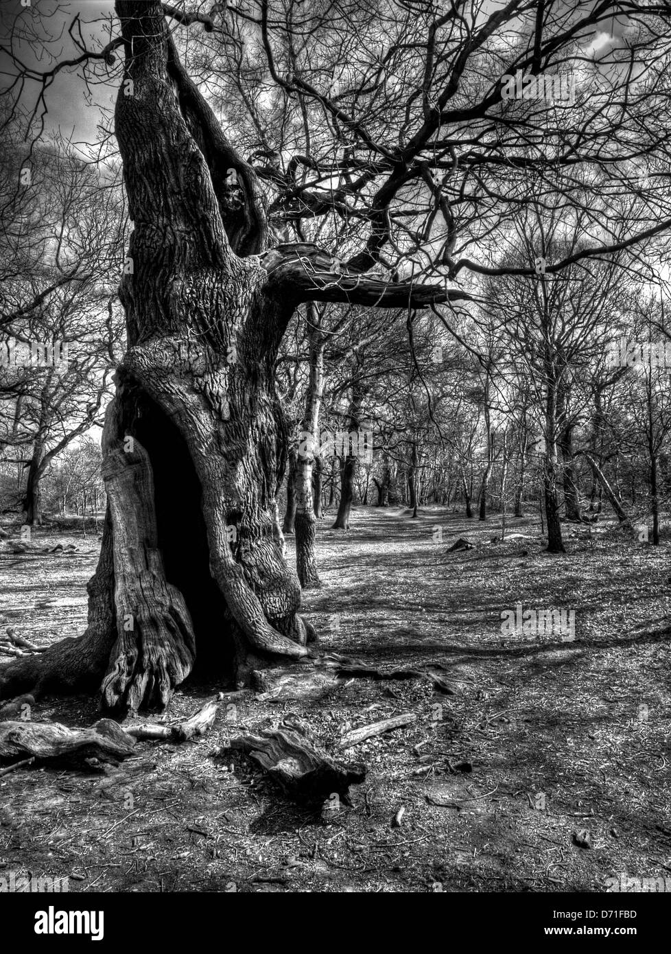 Shot at Sherwood Forest - Stock Image