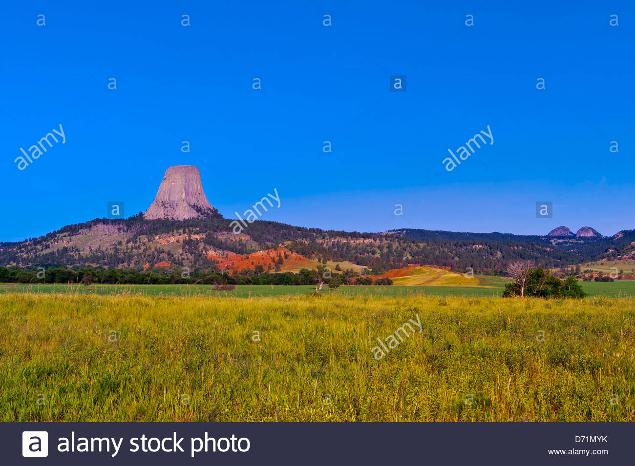 The 867 foot tall Devils Tower (a granite monolith which is a sacred site to American Indians), Devils Tower National - Stock Image