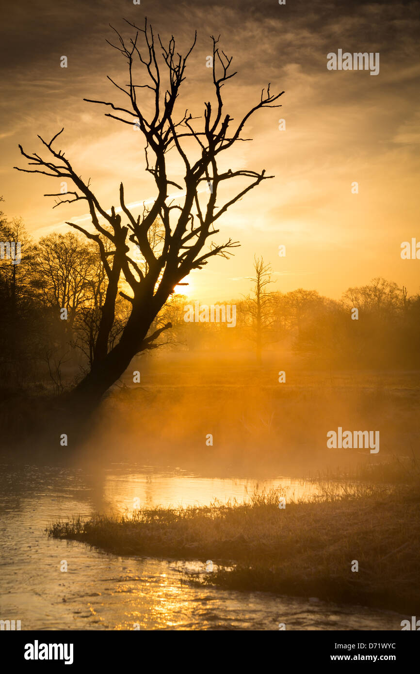 Early sunrise with backlit tree and little fog - Stock Image