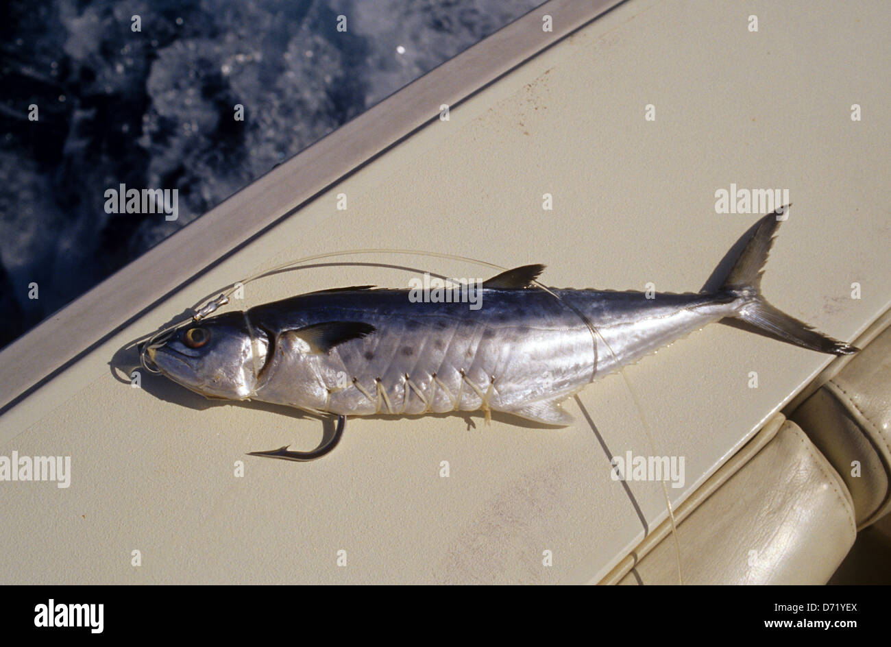 A Mackerel Bait Used For Offshore And Deep Sea Fishing Near Port Stock Photo Alamy