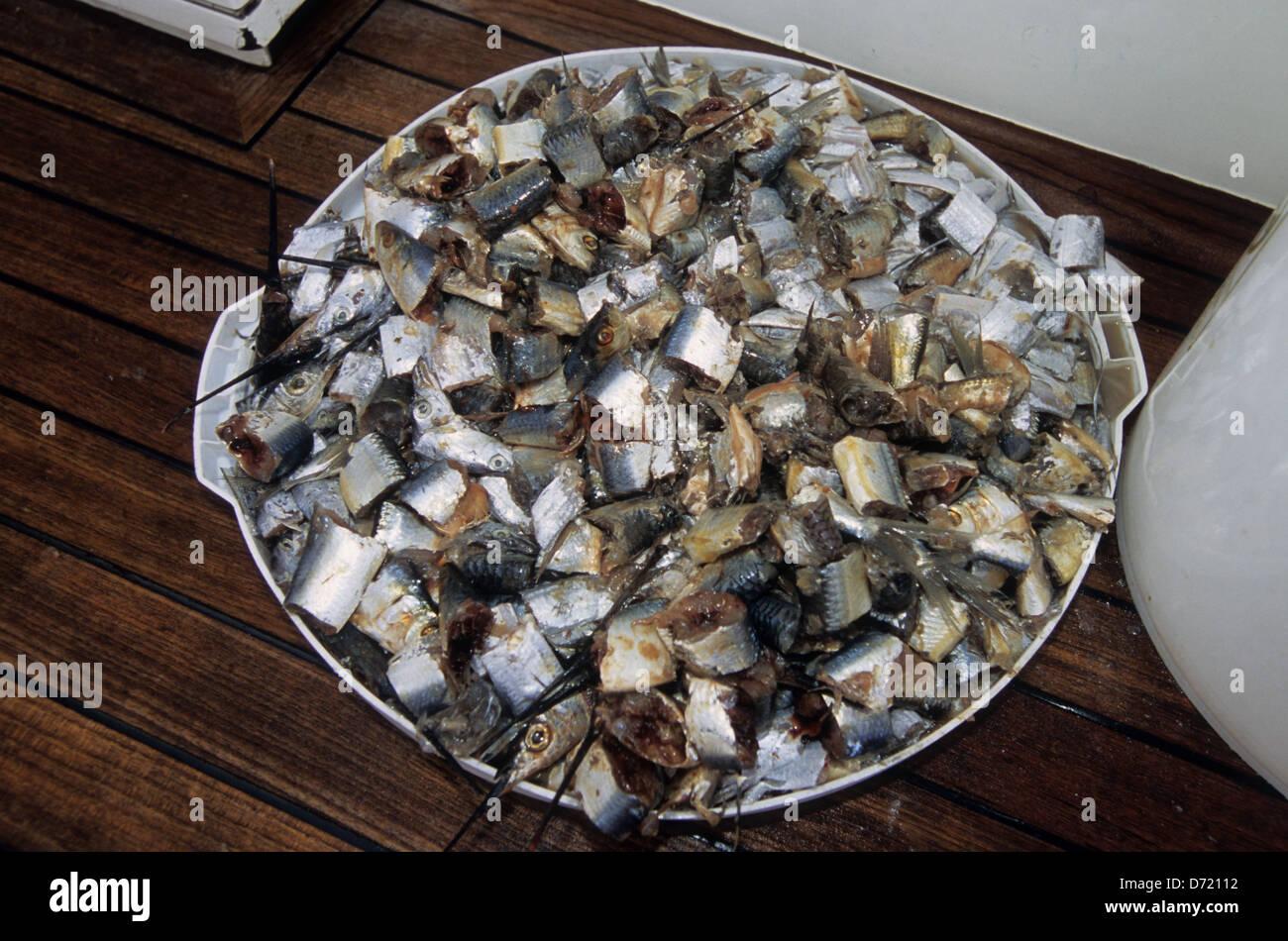 chum used for offshore and deep sea fishing near port aransas texas