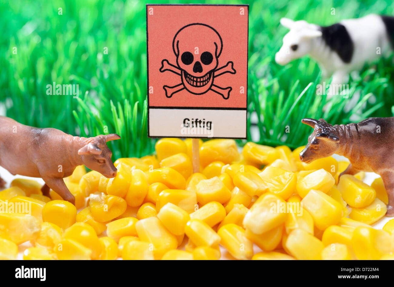 Cow's figures and maize with poison sign, feed scandal - Stock Image