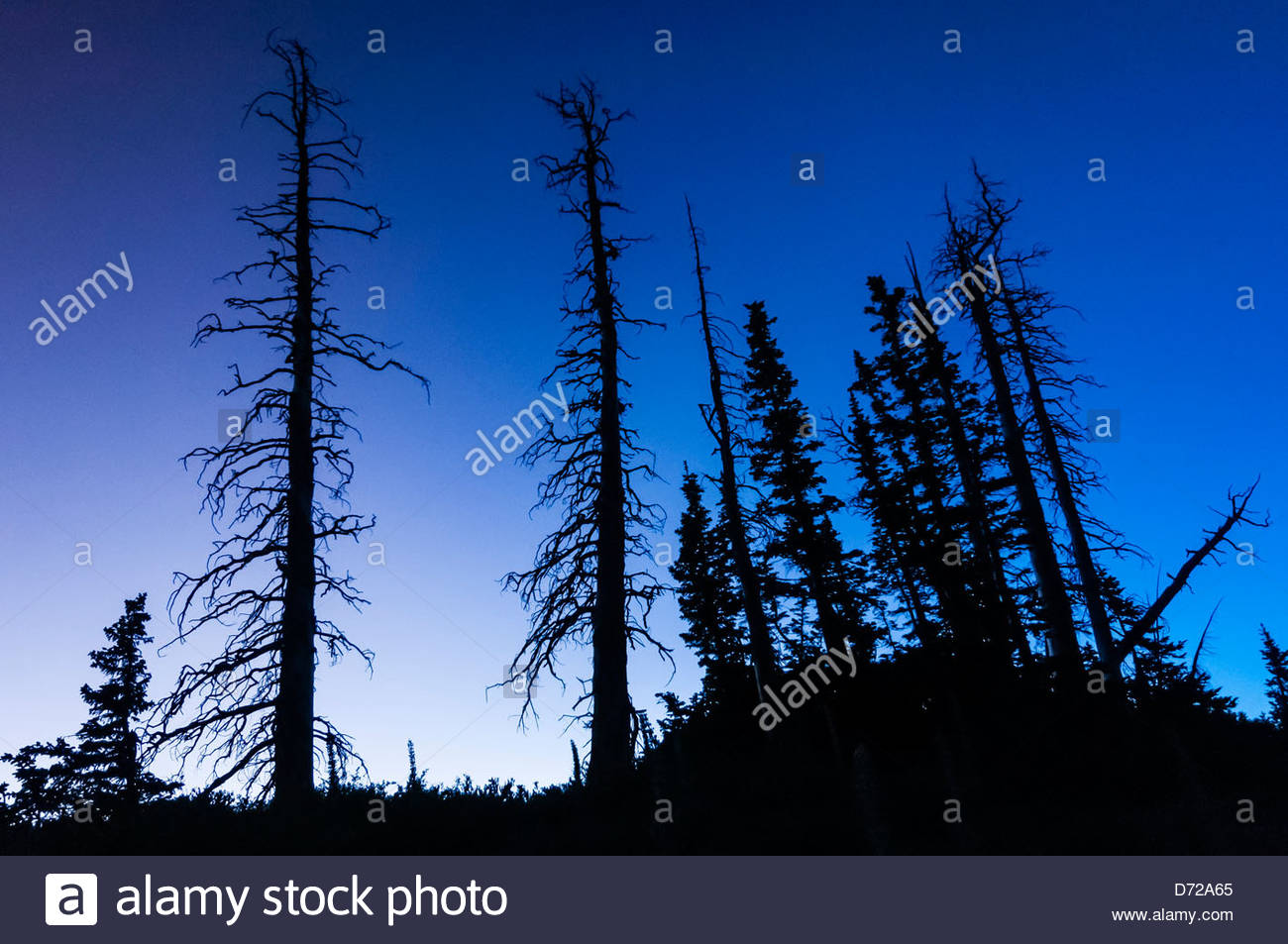 Cedar Breaks National Monument, Utah, USA - Stock Image