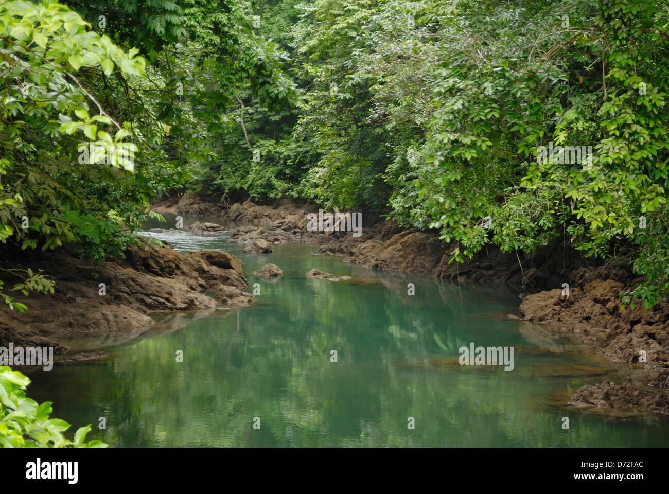 A river in the rainforest  on the Osa Peninsula, Costa Rica - Stock Image