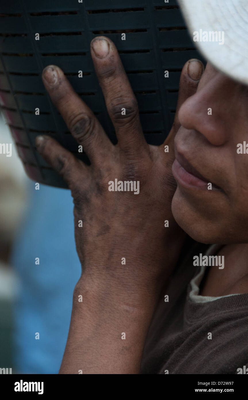 Close-up hands of Coffee plantation worker Costa Rica - Stock Image