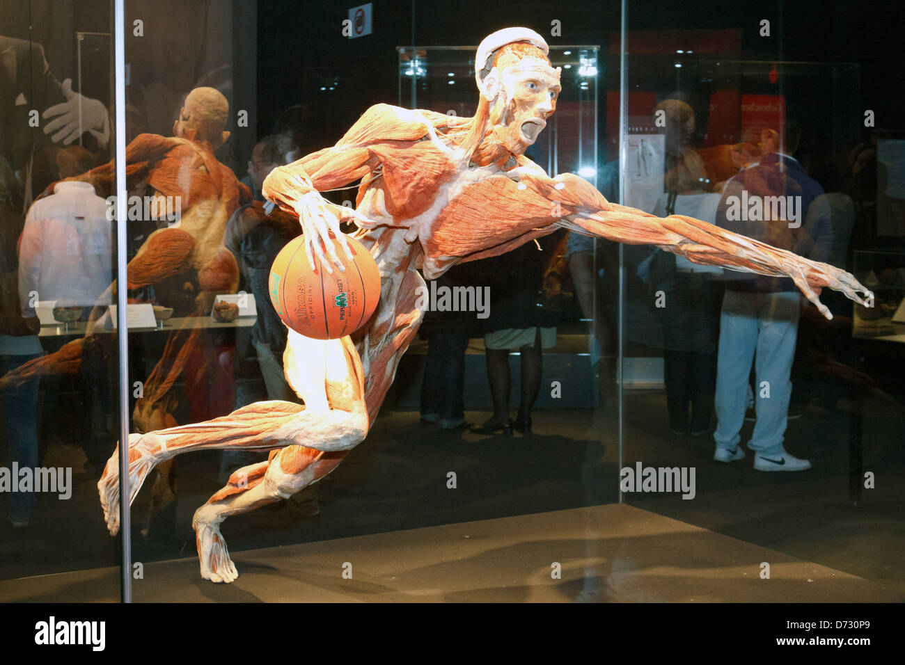 Berlin, Germany, plastination The basketball player at the