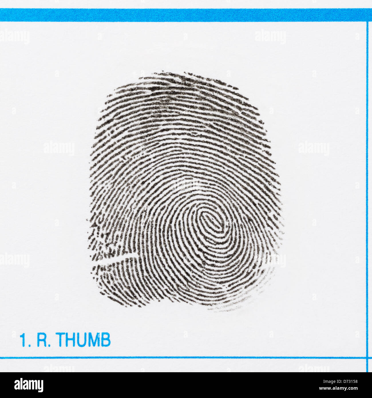 Thumbprint of a right thumb showing a whorl and various minutiae - Stock Image