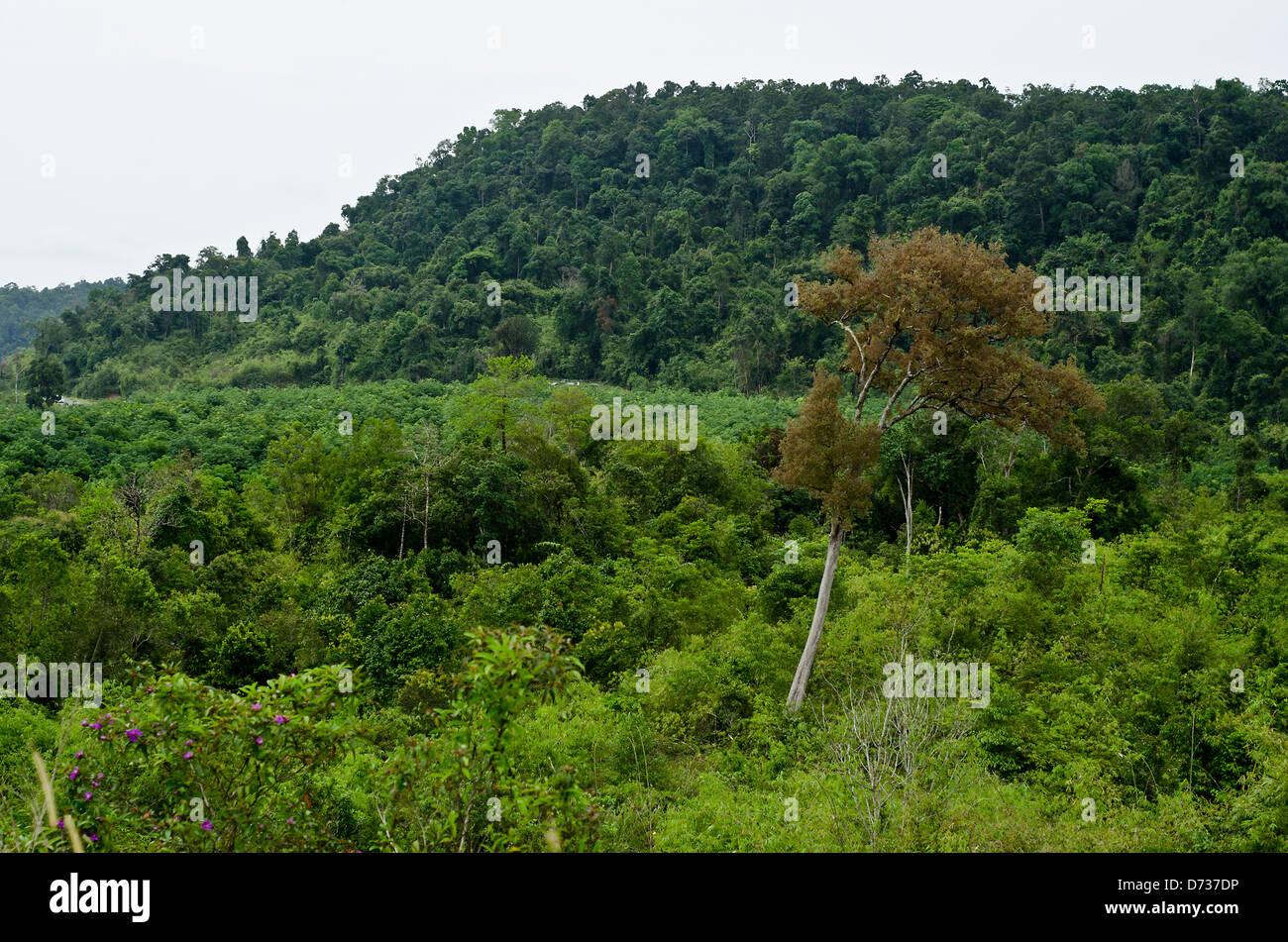 cardamom mountains, chi phat stock photo: 56005426 - alamy