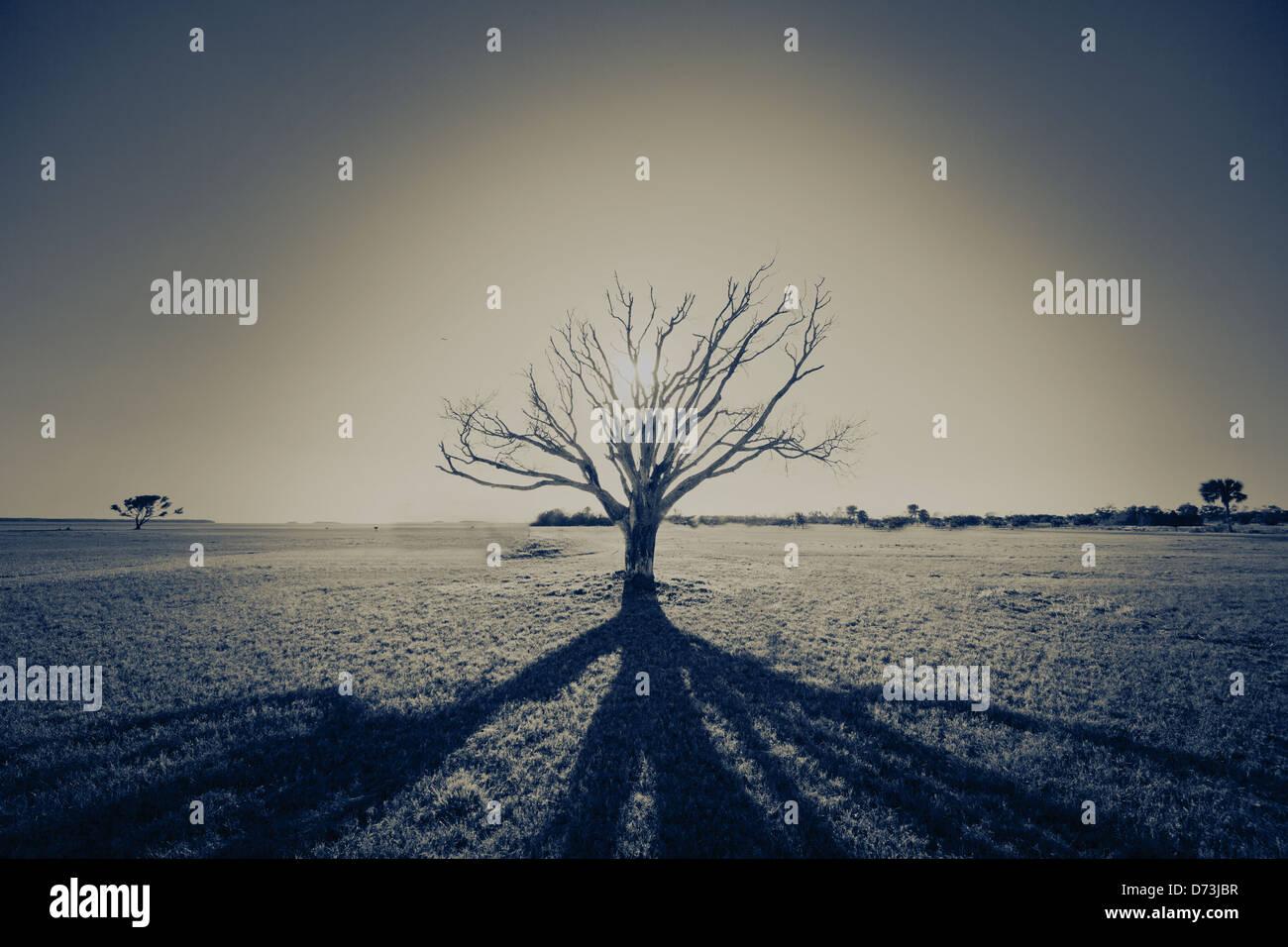 tree, silhouette, sun, beach, sadness, depression, shadow, shadows - Stock Image