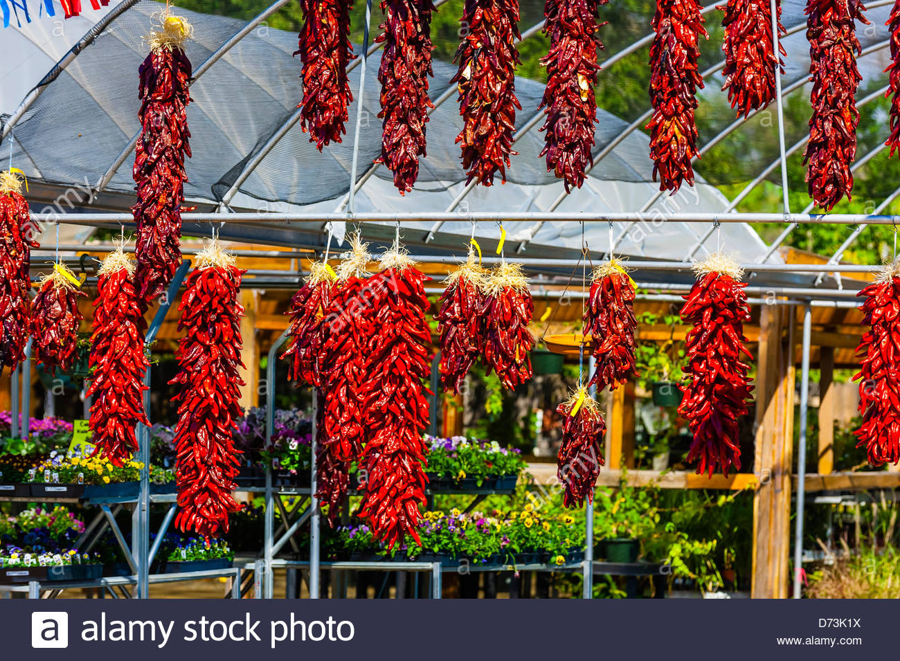 Ristras (drying red chile pepper pods), Jericho Nursery, Albuquerque, New Mexico USA - Stock Image