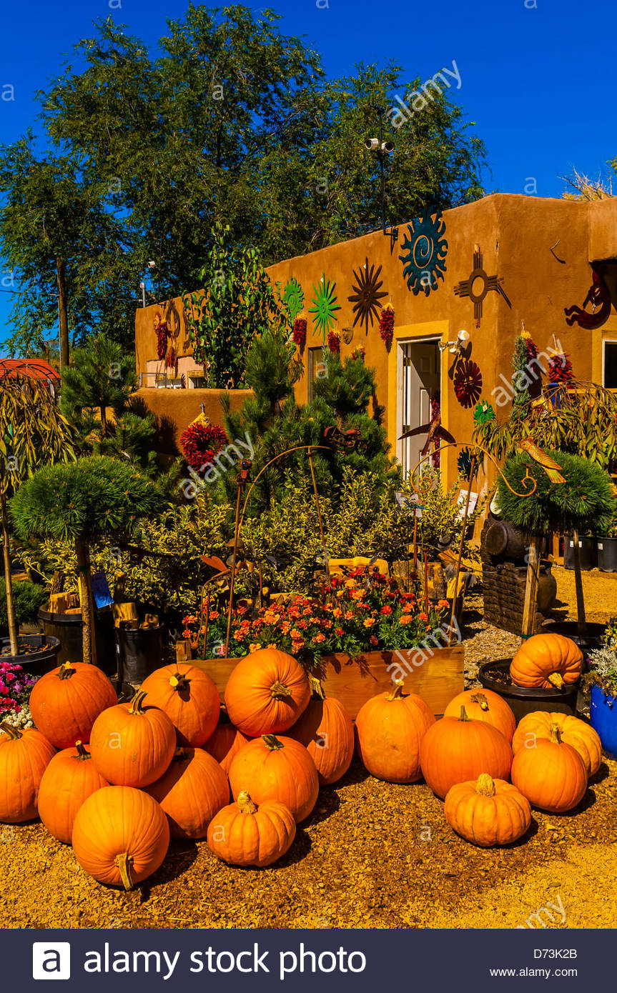 Pumpkins and ristras (drying red chile pepper pods), Jericho Nursery, Albuquerque, New Mexico USA - Stock Image