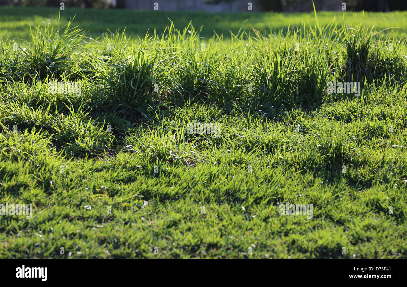 Green Grass Bushes Stock Photo 56016913 Alamy