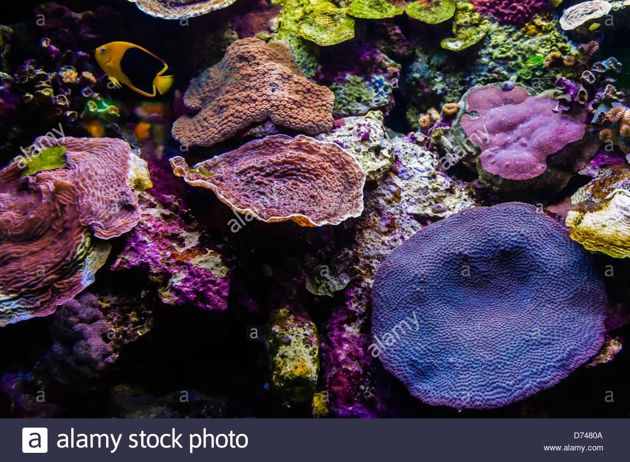Coral Reef Aquarium, Xcaret Park (Eco-archaeological Theme park), Riviera Maya, Quintana Roo, Mexico - Stock Image