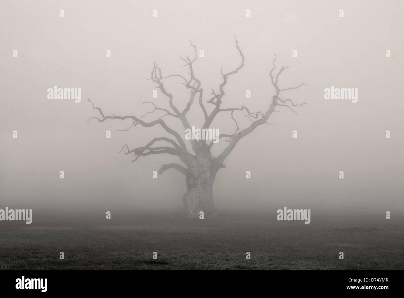 Petrified Oak Tree - Stock Image