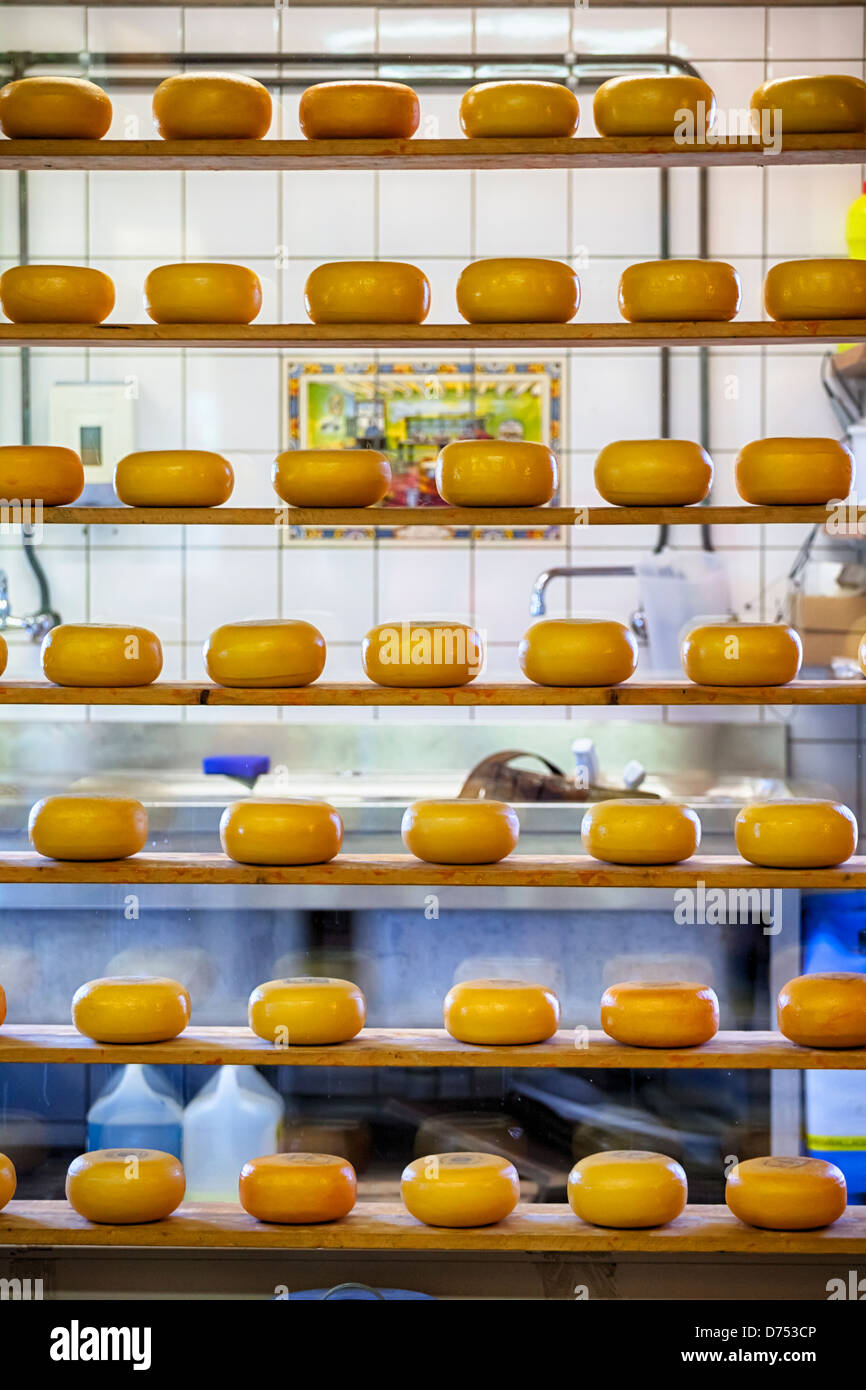 cheese dairy in Zaanse Schans, Zaandam, North Holland, Netherlands - Stock Image