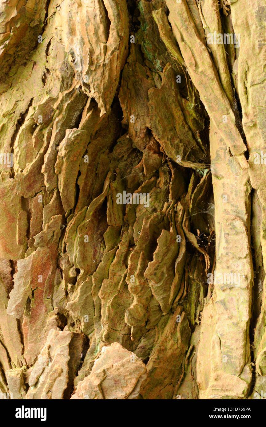 Weathered laminated sandstone wall - Stock Image