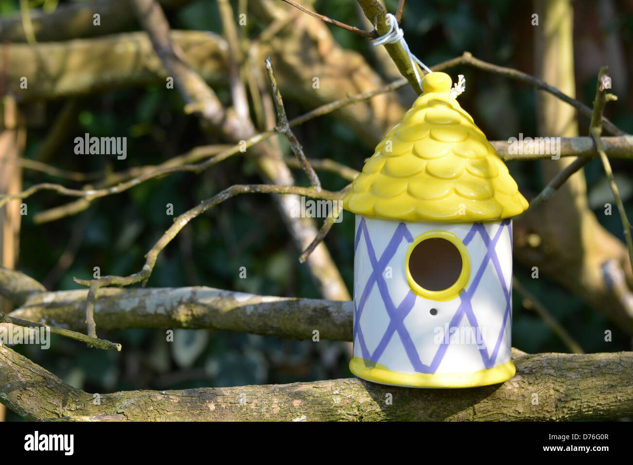 A colourful birdhouse on a tree branch - Stock Image