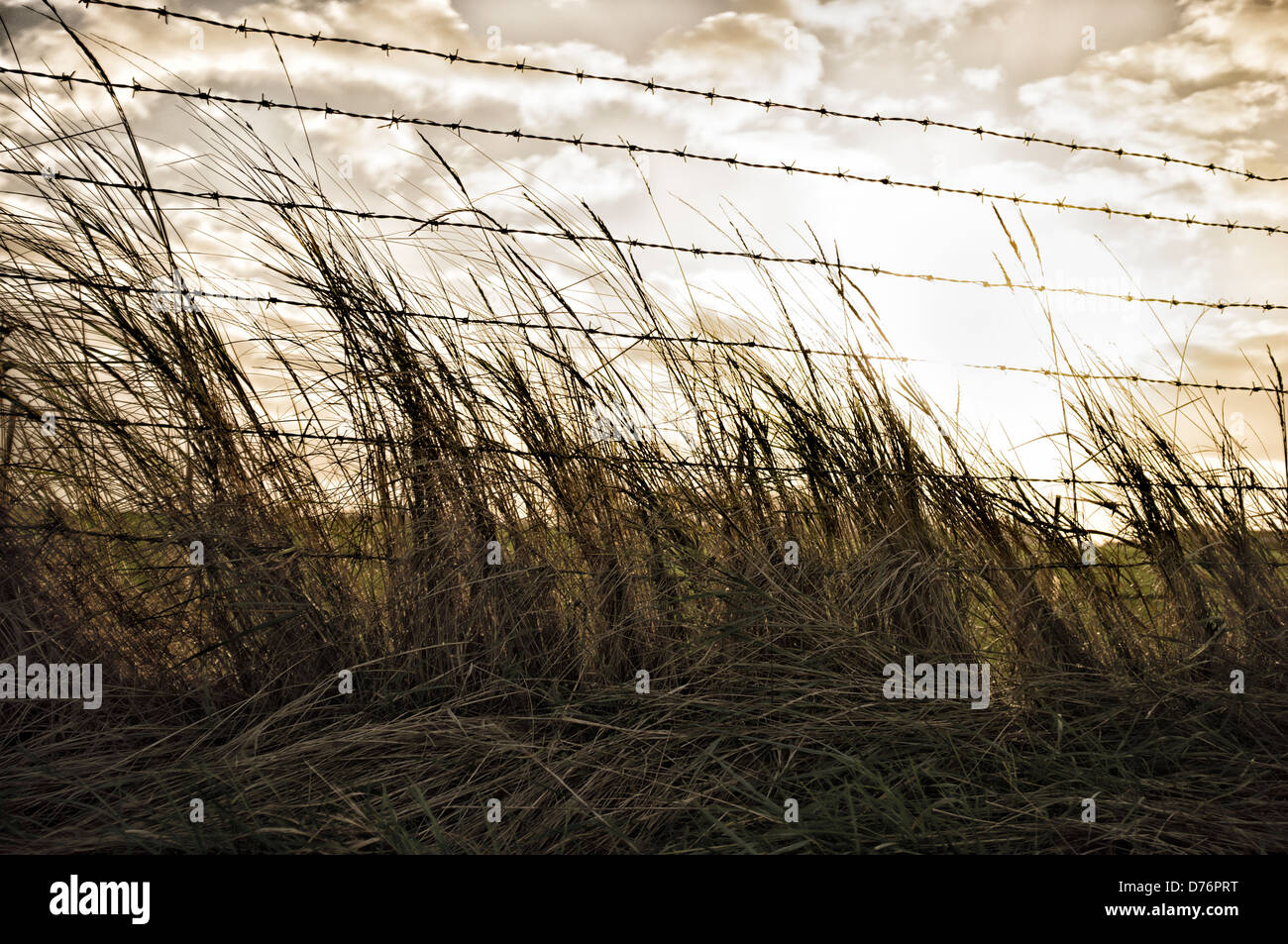 Grass and Barbed Wire Fence in front of a dramatic stormy sky. Picture by Julie Edwards - Stock Image