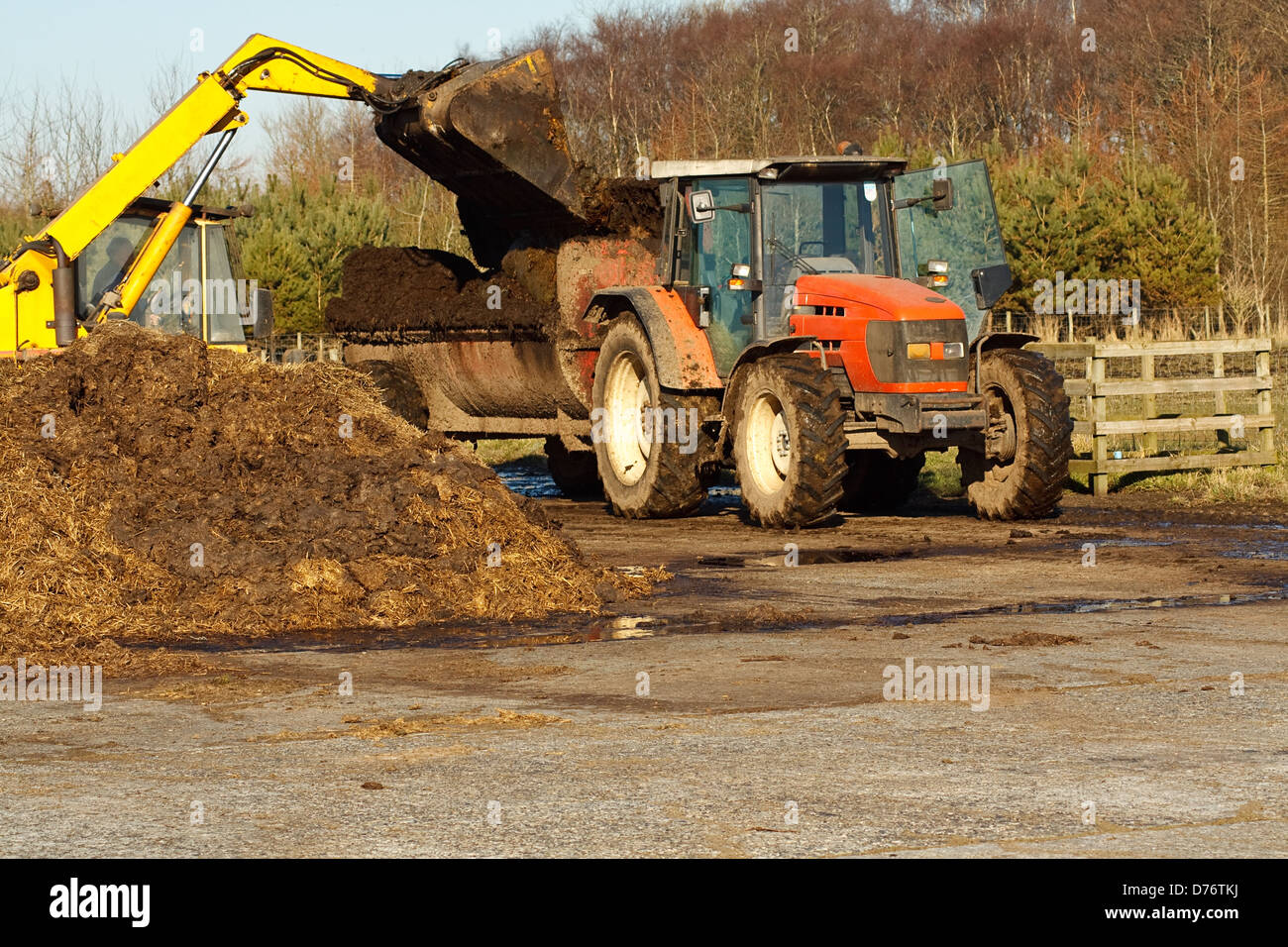 agricultural scene of farmer loading his commercial muck spreader with manure before fertilising his field - Stock Image