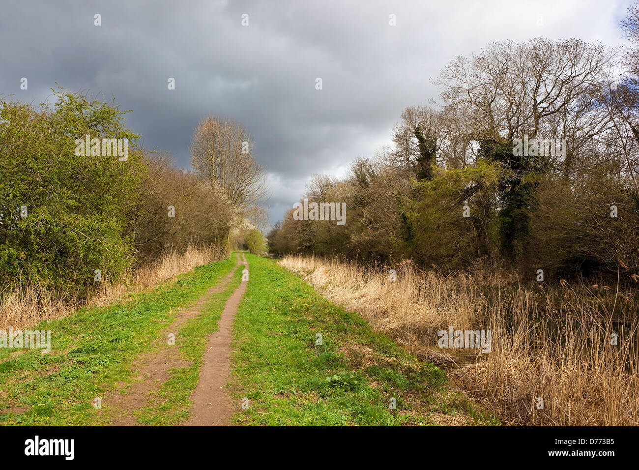 A picturesque towpath in springtime with hedgerows, trees and canal under a dramatic cloudy sky - Stock Image