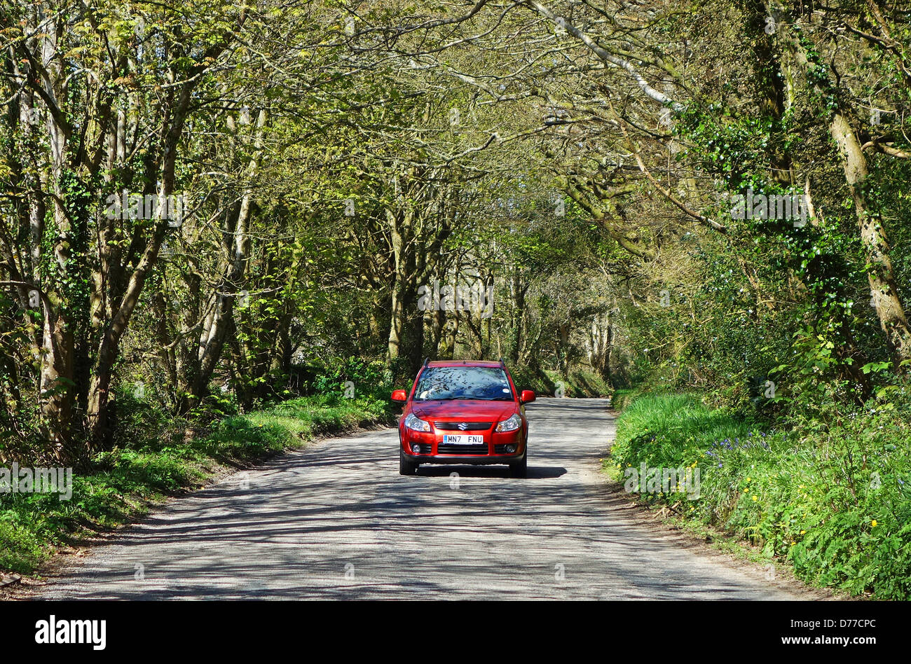 A red car driving along a woodland road - Stock Image