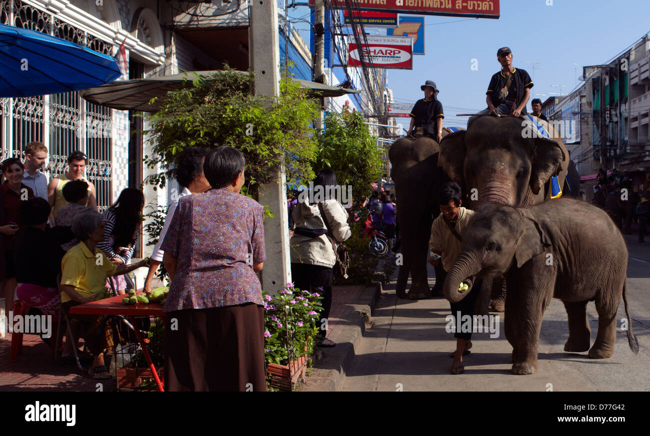 Thailand Surin city elephants in the street during the festival Stock Photo