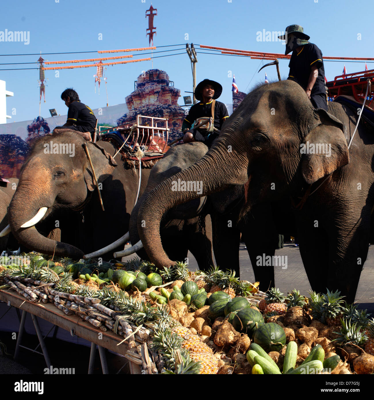 Thailand Surin city elephants in the street during the festival - Stock Image