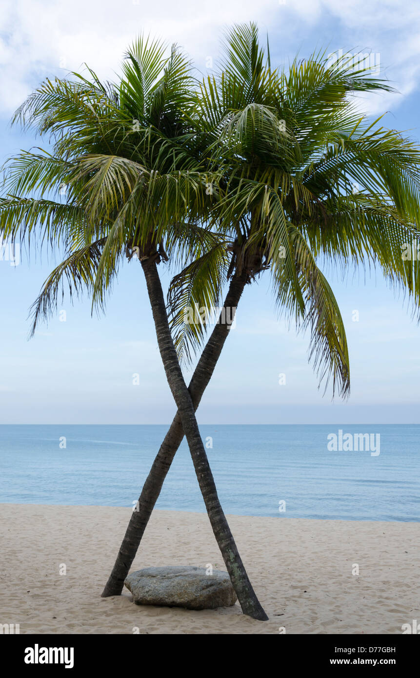 Two coconut palm trees shaped like an X on a sandy beach in Thailand and a smooth boulder at base - Stock Image