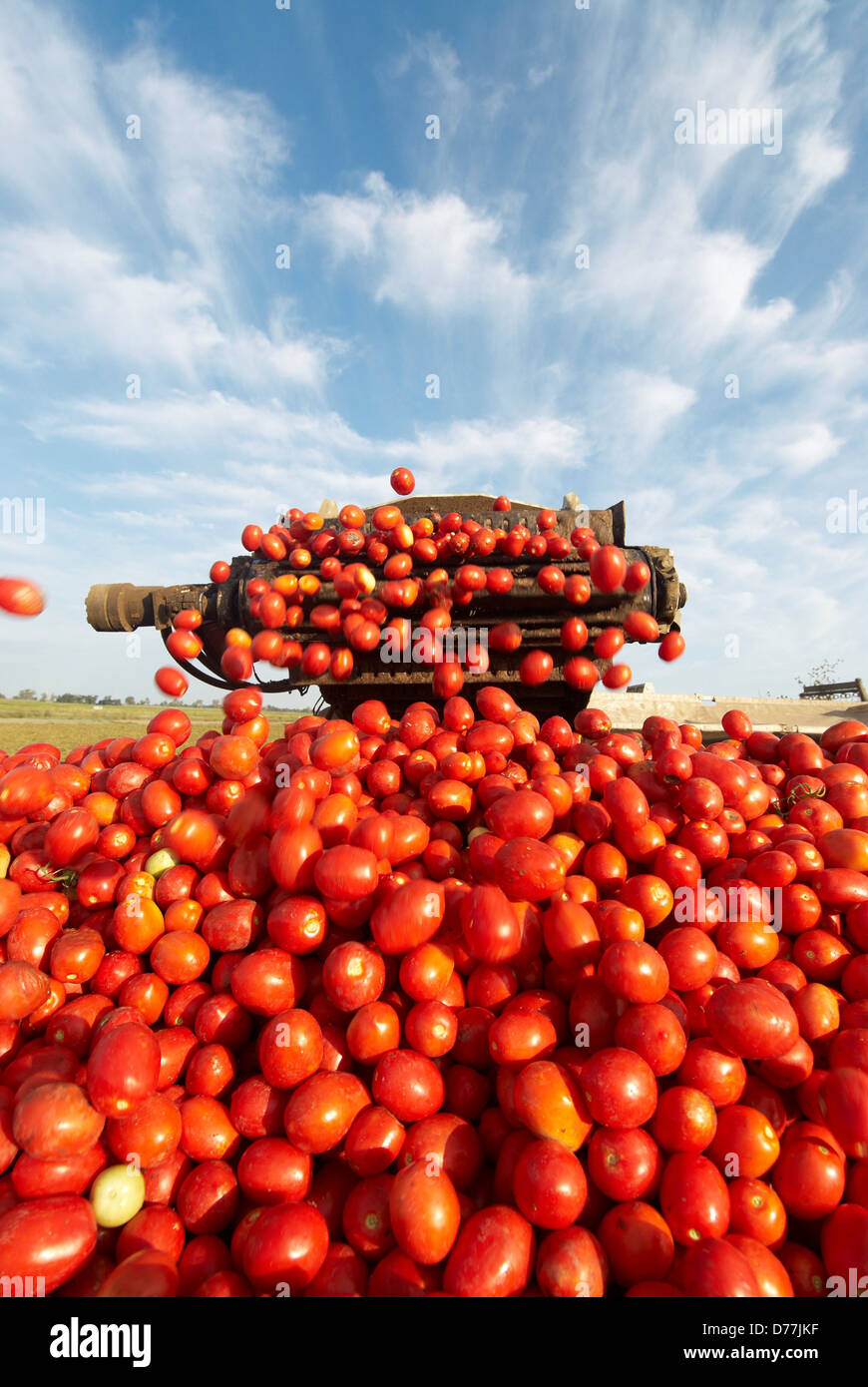grГјne tomaten trailer deutsch
