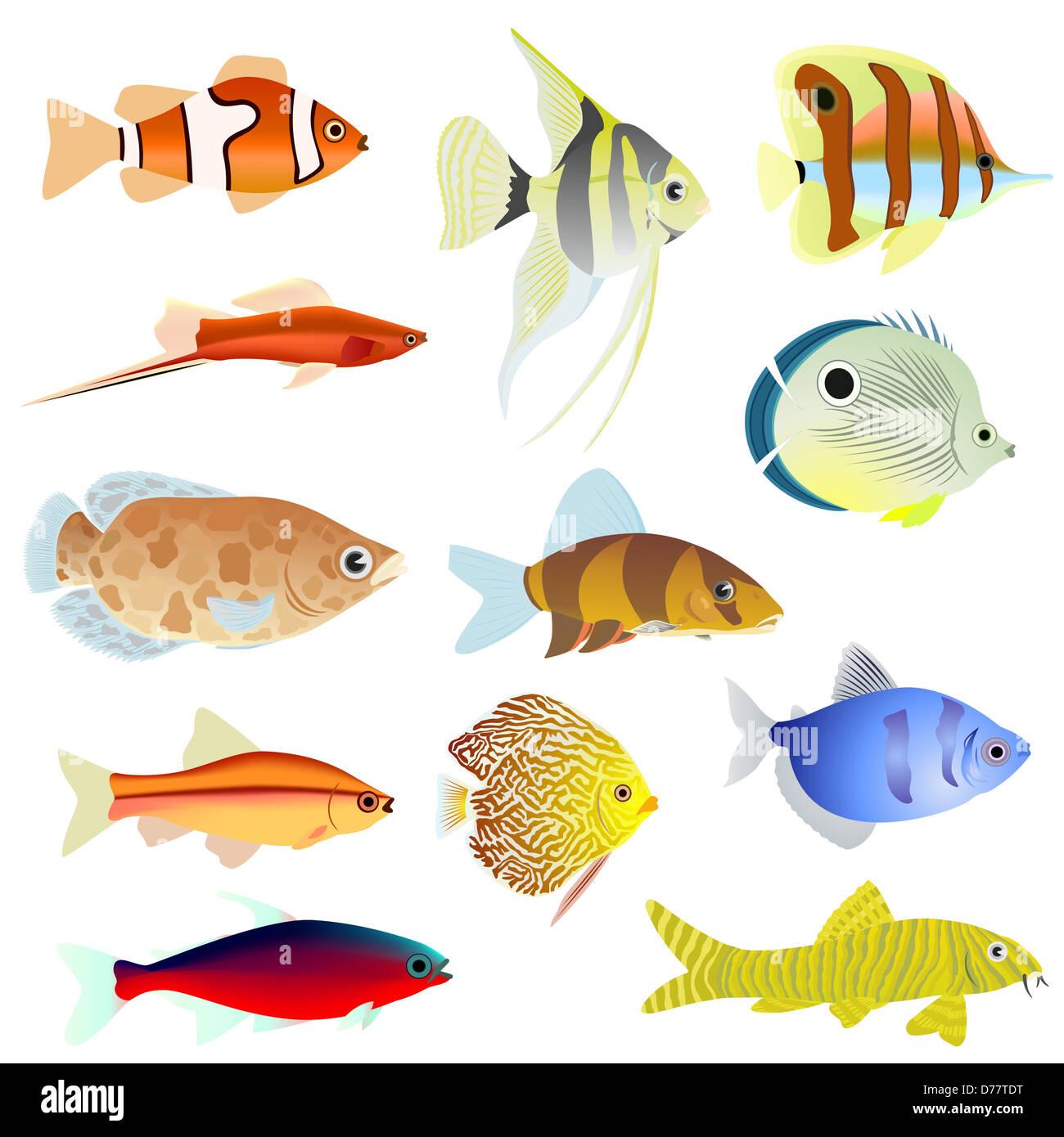 Set of aquarium fish. The illustration on a white background. - Stock Image
