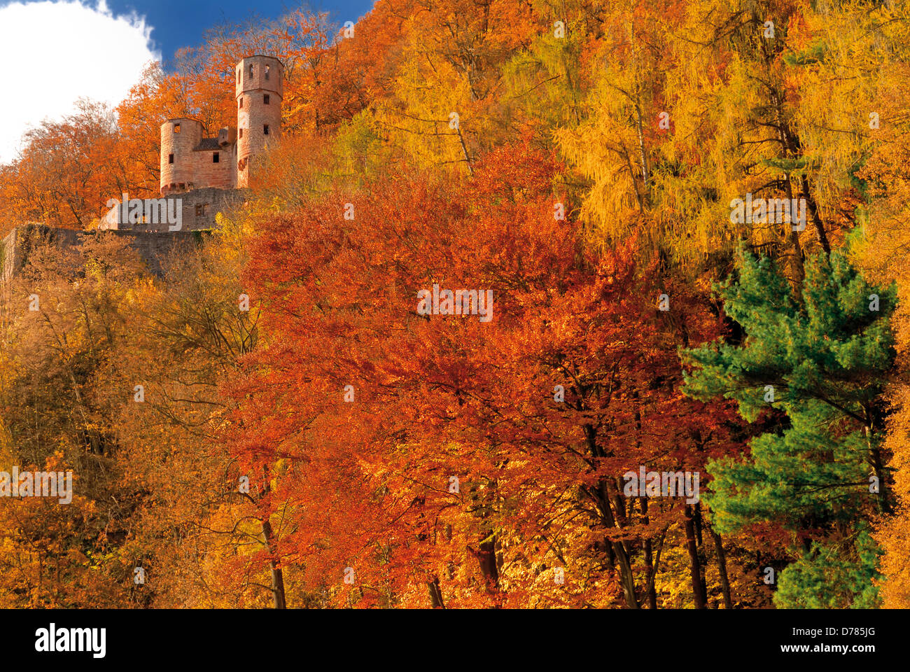 """Germany, Hessen: Medieval castle """"Schadeck"""" surrounded by autumn forest in Neckarsteinach Stock Photo"""