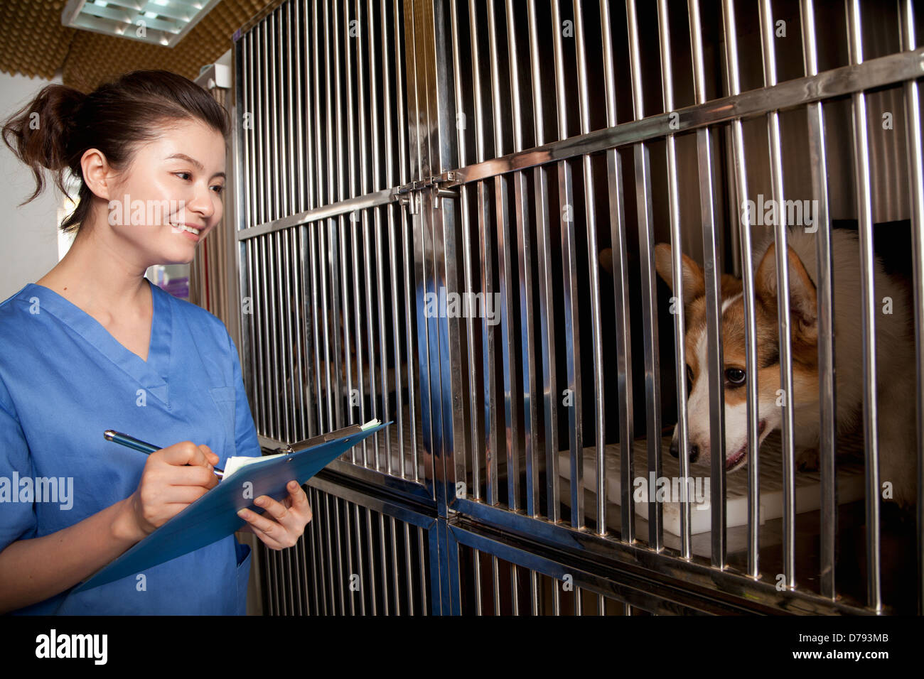 Veterinarian filling out medical chart - Stock Image