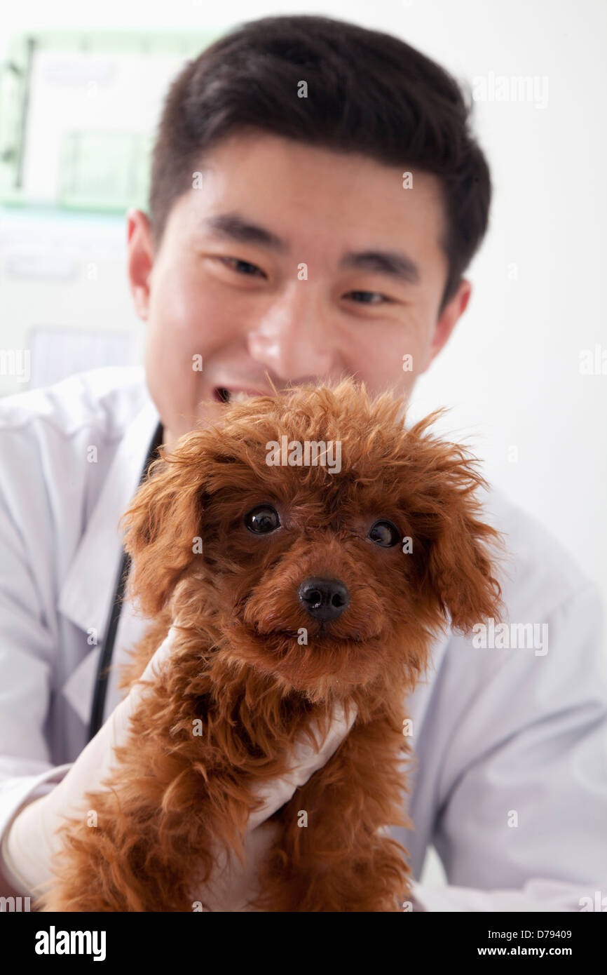 Veterinarian holding dog in office - Stock Image
